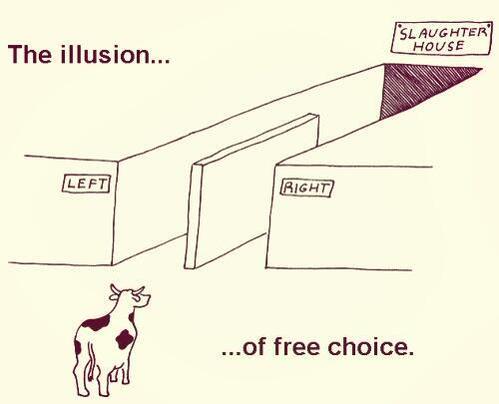 voting illusion